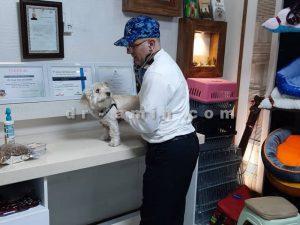 درمان حیوانات خانگی