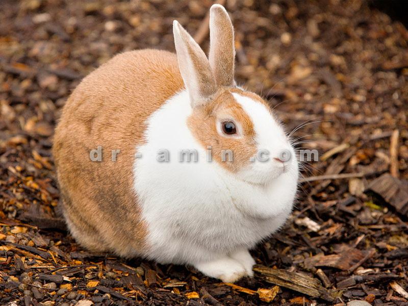مشاوره خرید و نگهداری خرگوش و پرندگان زینتی