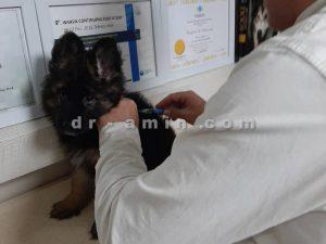 واکسیناسیون حیوانات