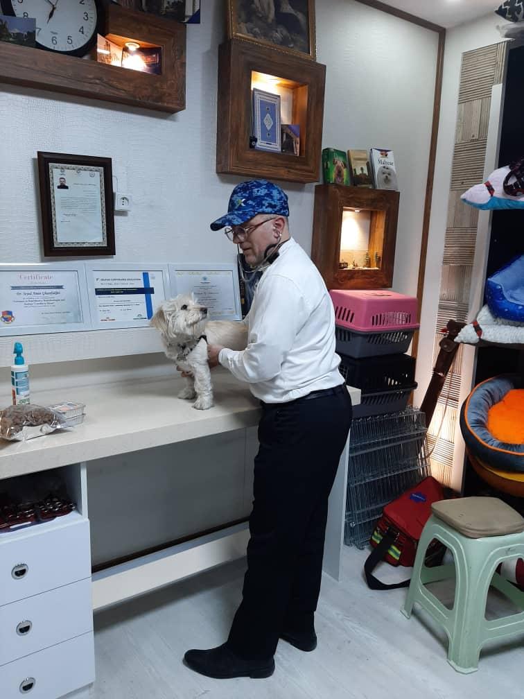 کلینیک حیوانات خانگی شمال تهران