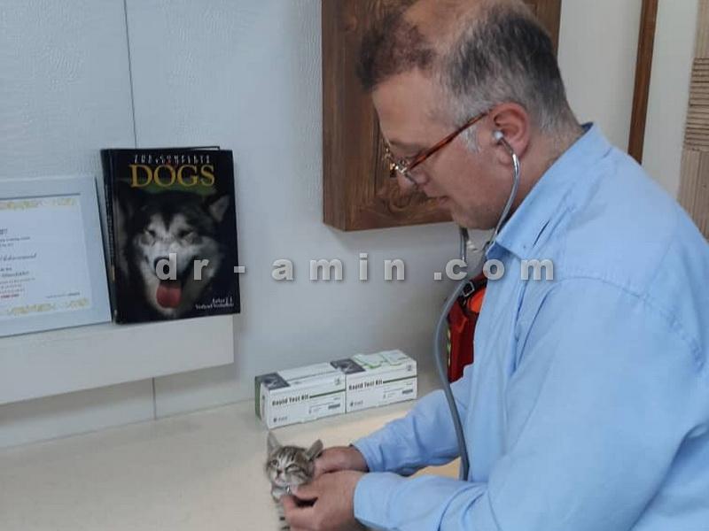 کلینیک حیوانات خانگی هروی