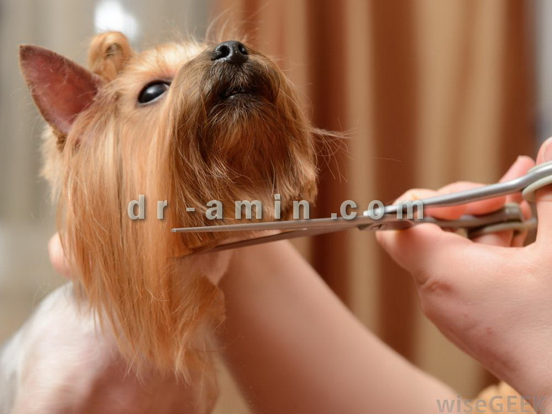 اصلاح و آرایش سگ