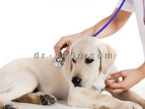 درمان دیستمپر سگ