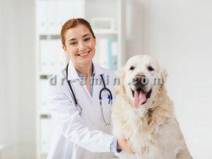 درمان پارواویروس سگ