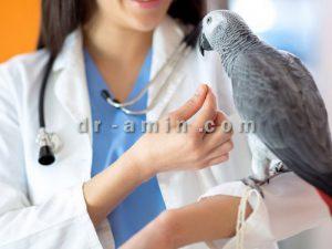 درمان پرندگان زینتی