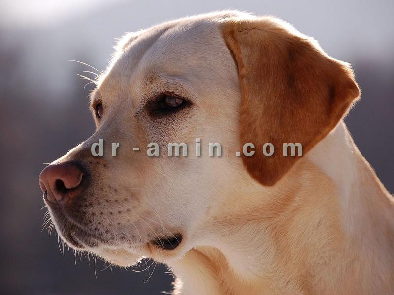 صدور شناسنامه سگ