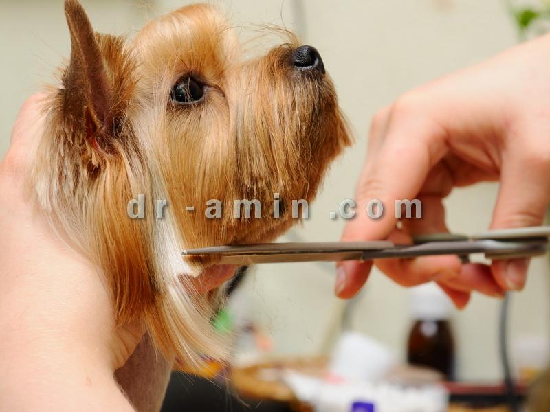 قیمت آرایش حیوانات خانگی