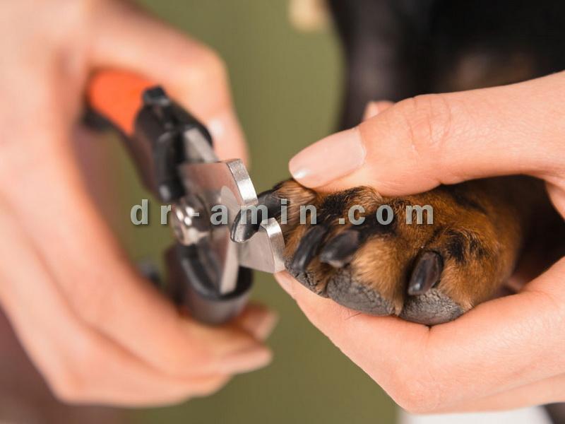 ناخن گیری سگ