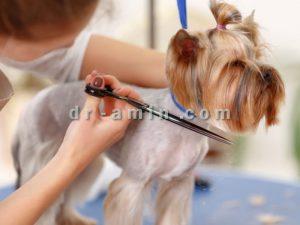 آرایشگاه سگ و گربه