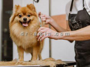 آرایش و شستشوی حیوانات
