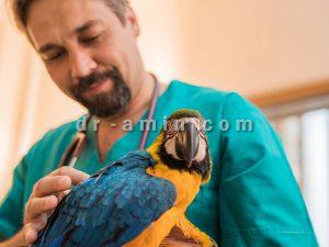 معاینه و درمان پرندگان زینتی