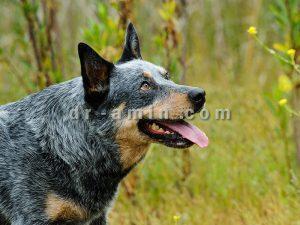 درمان رفتار جنسی غیر طبیعی سگ