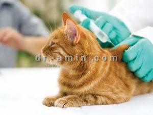 واكسيناسيون گربه