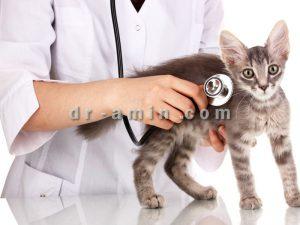 چکاپ دوره ای حیوانات خانگی
