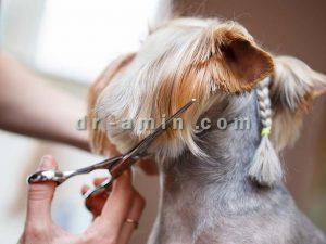 شستشو و آرایش سگ