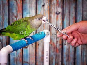 واکسیناسیون پرندگان زینتی