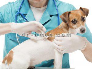 ویزیت حیوانات خانگی در محل