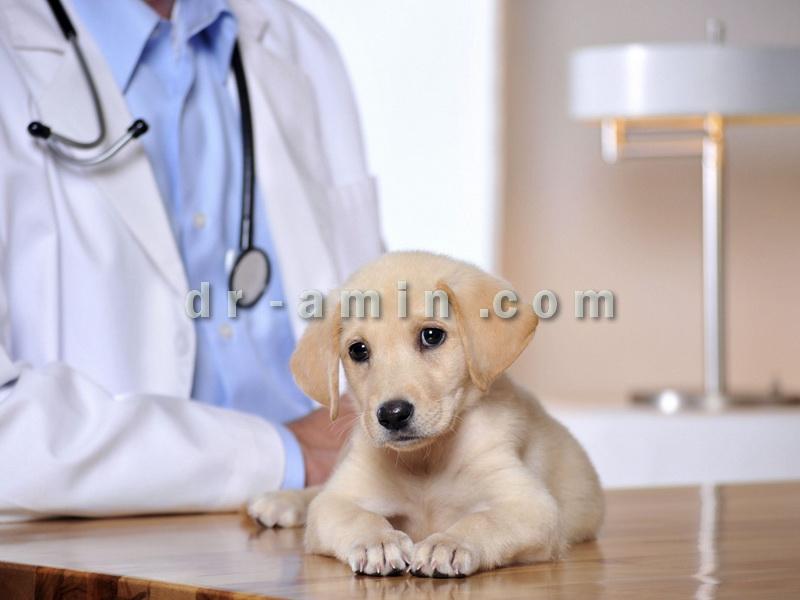 کلینیک دامپزشکی حیوانات