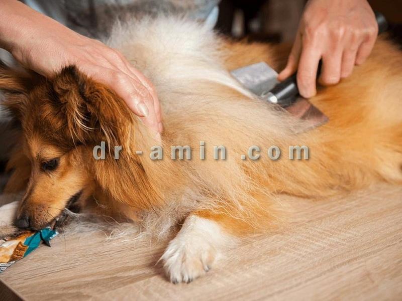 آرایش و اصلاح موی سگ