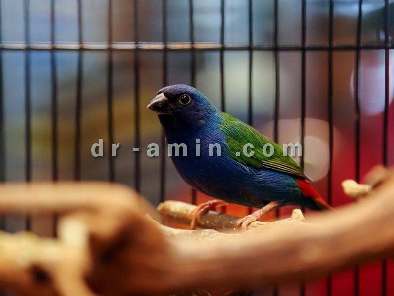 خرید و فروش پرنده