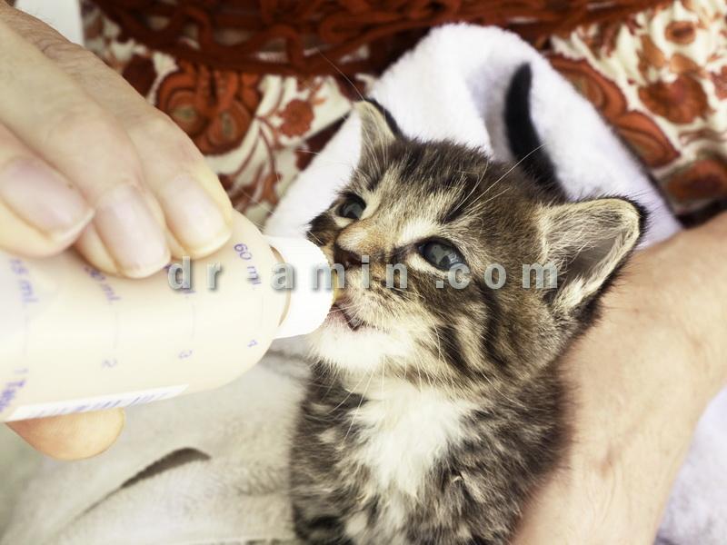 مشاوره خرید و نگهداری گربه