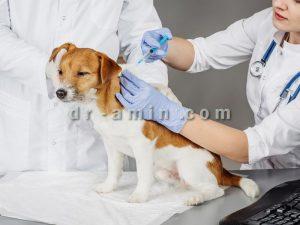 تزریقات حیوانات خانگی در محل