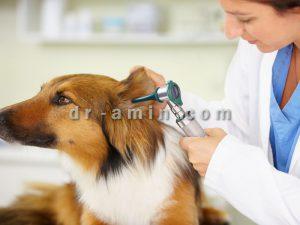 ویزیت حیوانات در محل پاسداران
