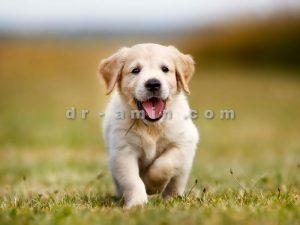 پرورش و تولید سگ های آپارتمانی