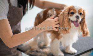آرایشگاه سگ منطقه یک