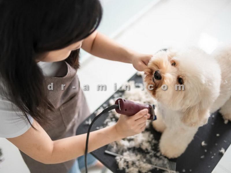 آرایشگاه سگ منطقه 1