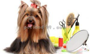 آرایش سگ