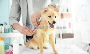 حراج اصلاح موی سگ