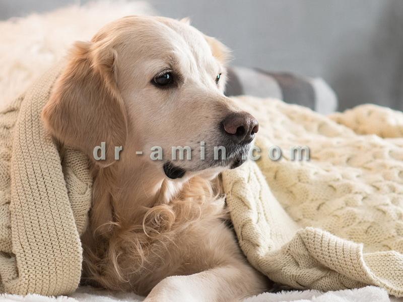 پانسیون خصوصی سگ