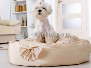 پانسیون سگ ویژه ولنتاین