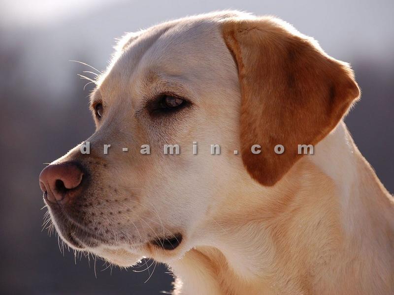 فروش سگ در بوشهر