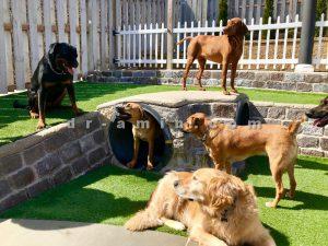 مهد کودک سگ ویژه افراد شاغل