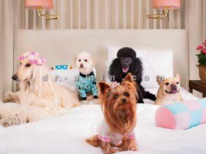 پانسیون سگ ارزان