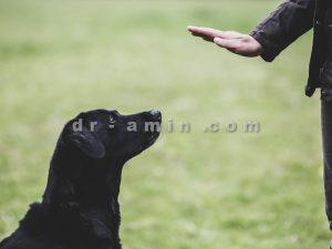 تربیت سگ نگهبان