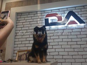 تعلیم و تربیت سگ در منزل